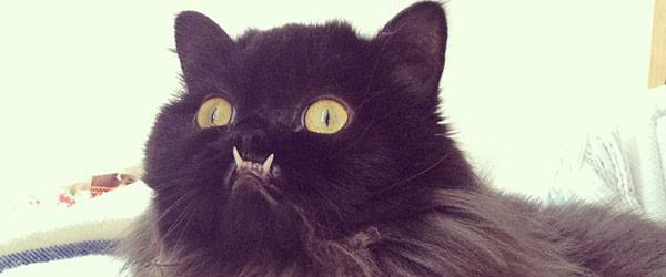 不是假牙,這隻貓真得長這樣!