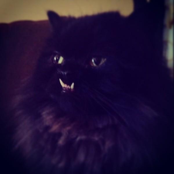 不是假牙,這隻貓真得長這樣!10