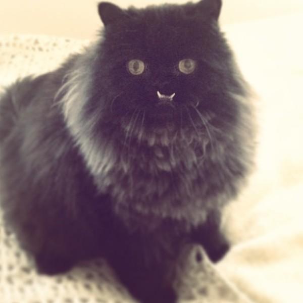 不是假牙,這隻貓真得長這樣!2