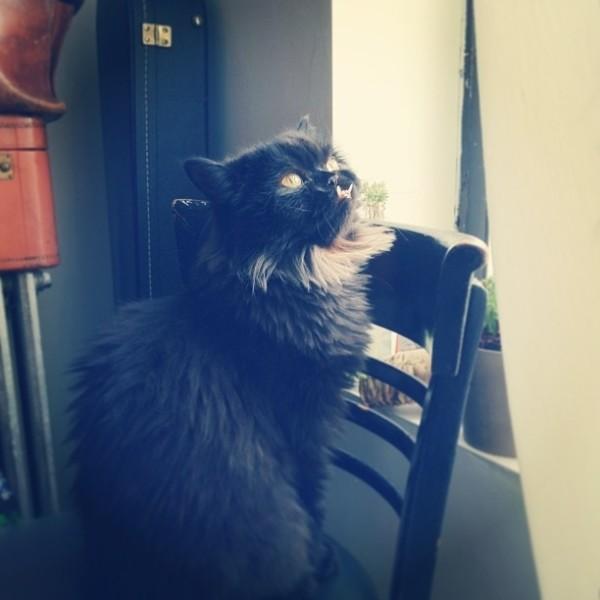 不是假牙,這隻貓真得長這樣!7