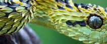 南非身上長滿綠葉子的蛇