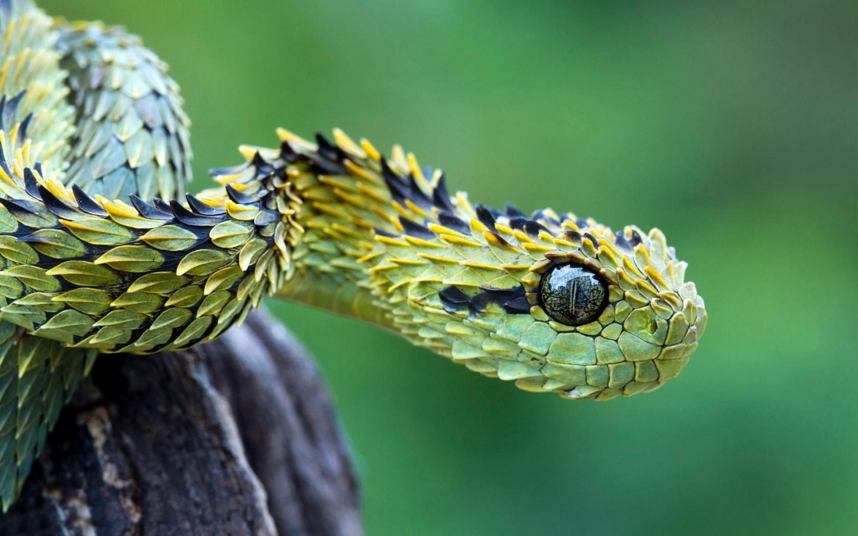 南非身上長滿綠葉子的蛇1