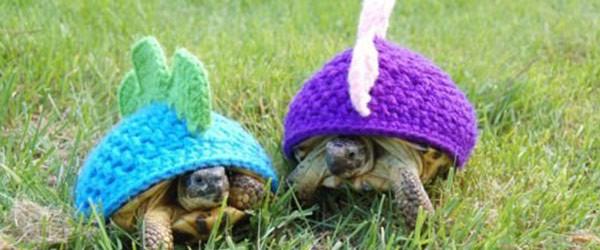 烏龜烏龜別著涼