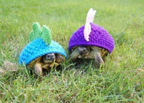 烏龜烏龜別著涼1_01