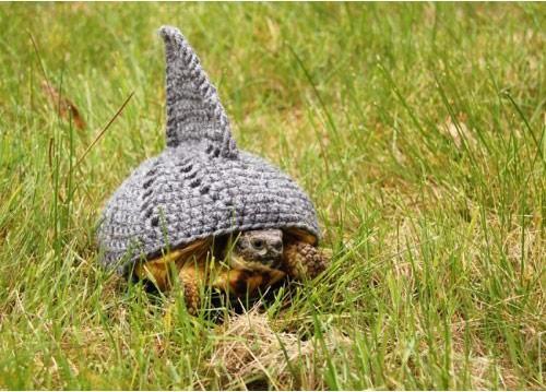 烏龜烏龜別著涼1_02