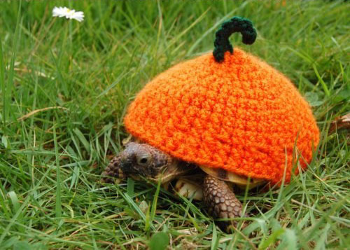 烏龜烏龜別著涼1_03