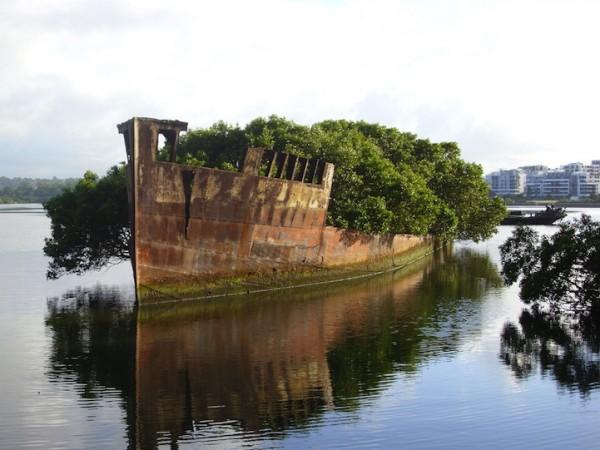 百年老船變身成漂流森林1