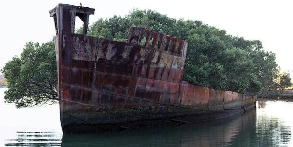 百年老船變身成漂流森林2