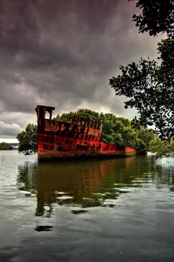 百年老船變身成漂流森林5