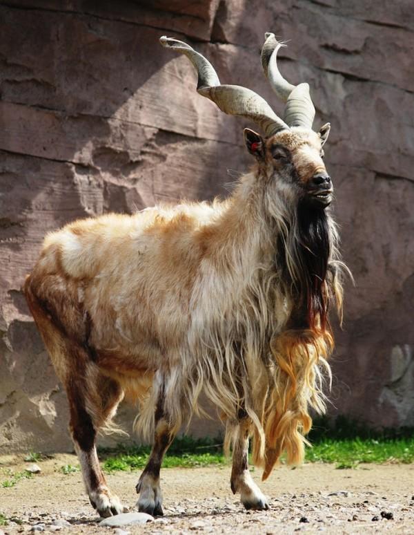 真的!你不曾見過卻真實存在的動物8