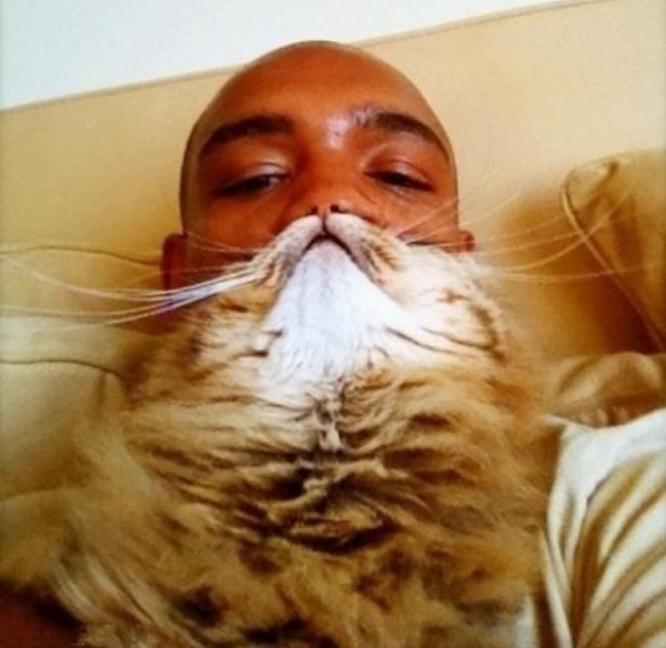 貓貓嘴!6