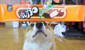 阿布,另一隻平衡宇宙萬物的狗