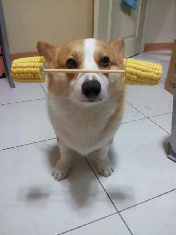 阿布,另一隻平衡宇宙萬物的狗10