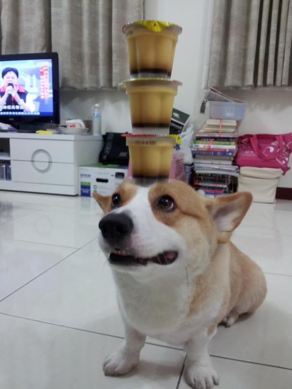 阿布,另一隻平衡宇宙萬物的狗13