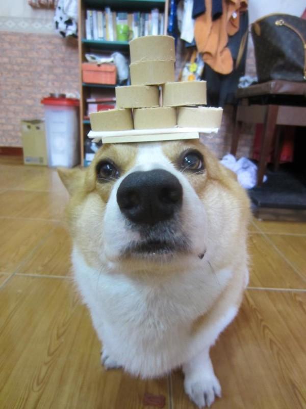 阿布,另一隻平衡宇宙萬物的狗16