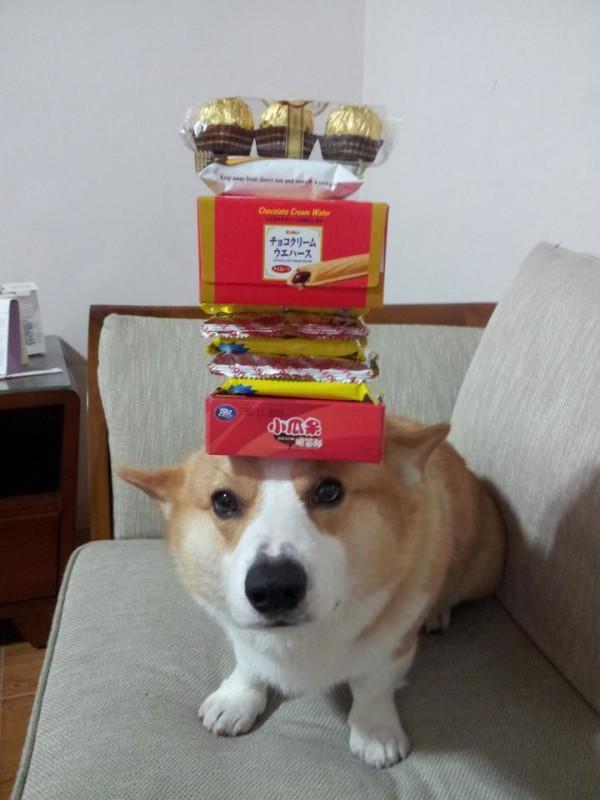 阿布,另一隻平衡宇宙萬物的狗18