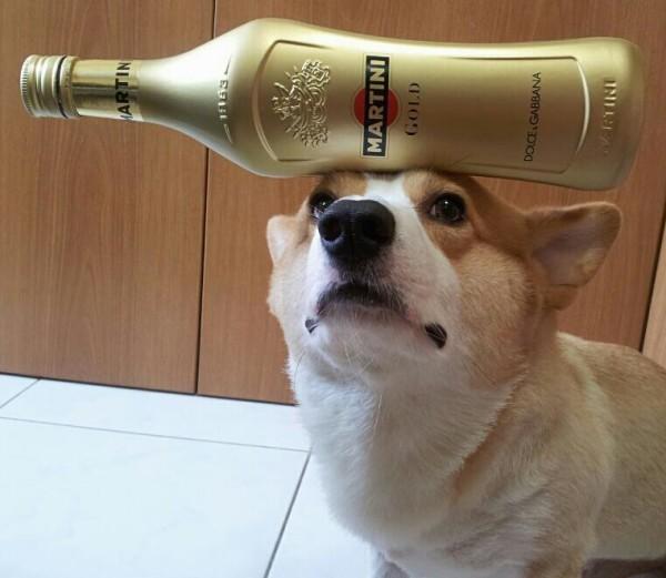 阿布,另一隻平衡宇宙萬物的狗2