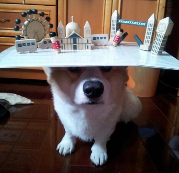 阿布,另一隻平衡宇宙萬物的狗22