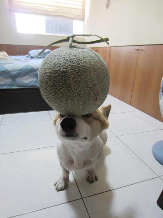 阿布,另一隻平衡宇宙萬物的狗3