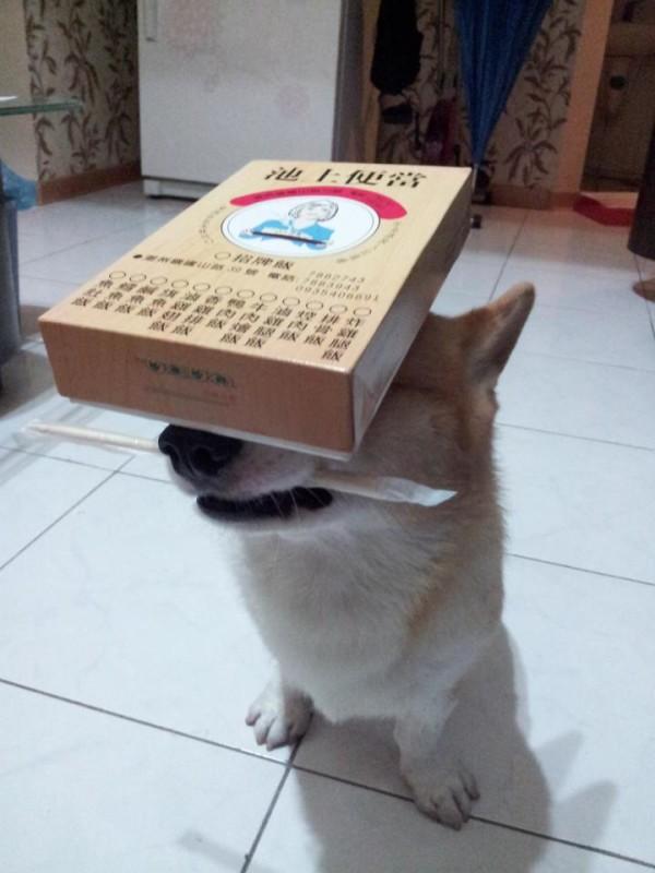 阿布,另一隻平衡宇宙萬物的狗5