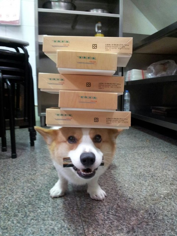 阿布,另一隻平衡宇宙萬物的狗6
