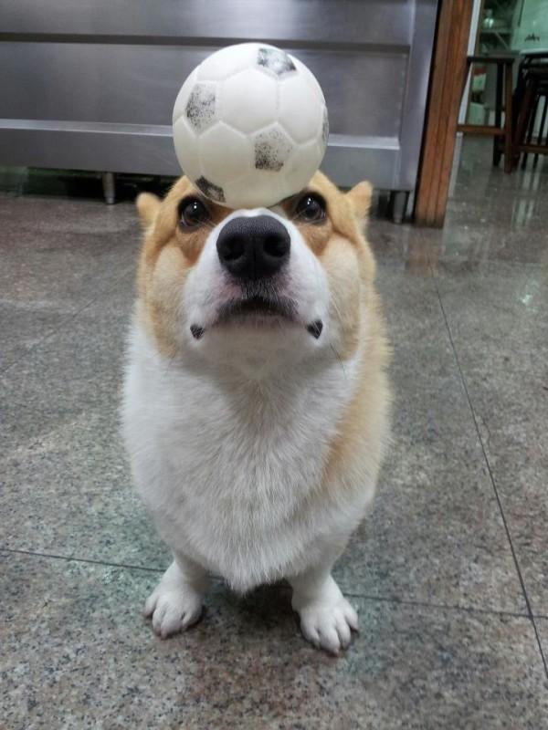 阿布,另一隻平衡宇宙萬物的狗7