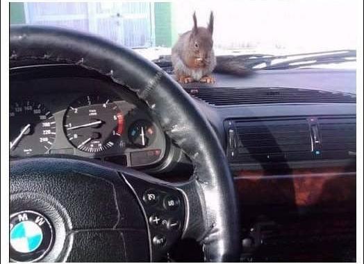 陪計程車司機一起載客的松鼠_03