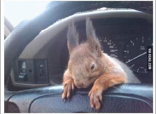 陪計程車司機一起載客的松鼠_05