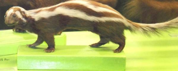 15種強到有點噁心的動物超能力11