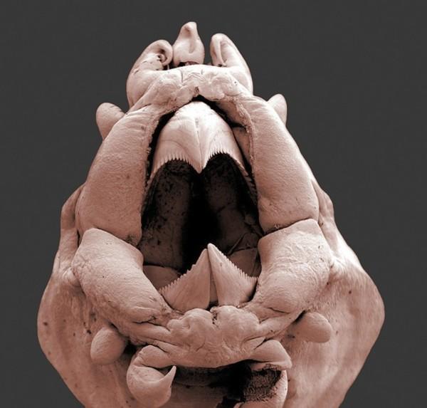25種你不想在顯微鏡下看到的東西22