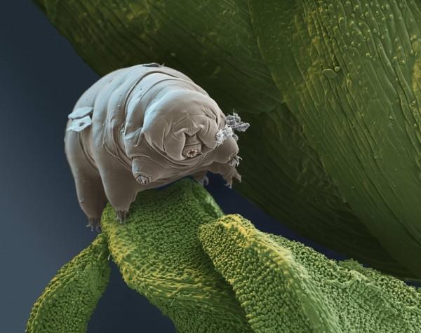 25種你不想在顯微鏡下看到的東西25