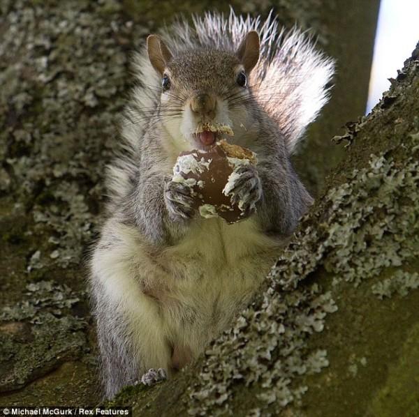吃糖吃到滿嘴都是的小松鼠5
