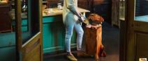 狗狗不是你的廚餘桶!
