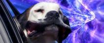 這是狗把頭伸出窗外的真實感受嗎?