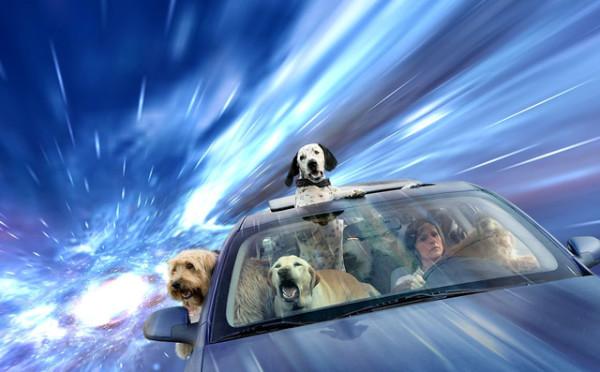 這是狗把頭伸出窗外的真實感受嗎?1