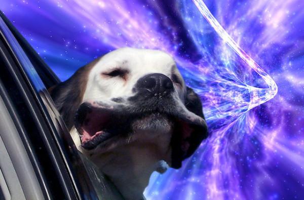 這是狗把頭伸出窗外的真實感受嗎?2
