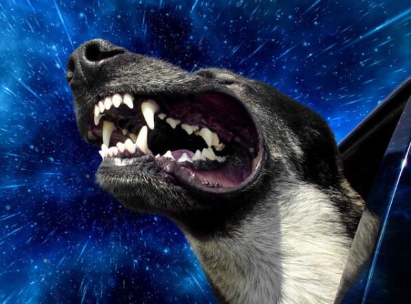 這是狗把頭伸出窗外的真實感受嗎?3