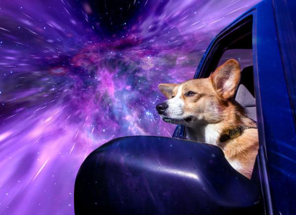 這是狗把頭伸出窗外的真實感受嗎?4