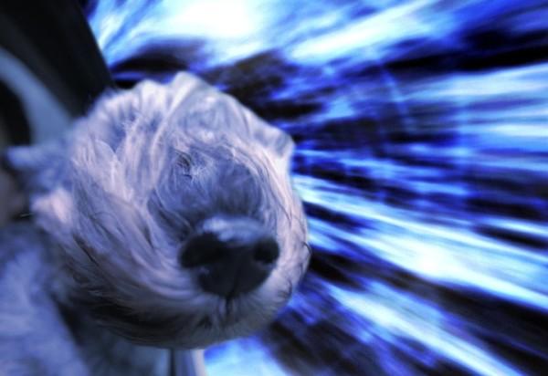 這是狗把頭伸出窗外的真實感受嗎?5