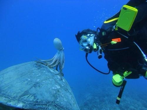 一隻搭海龜搭便車的烏賊與人類對望1