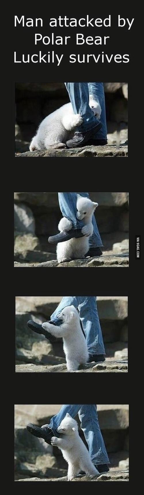 加拿大遊客遭受北極熊攻擊,奇蹟生還!1