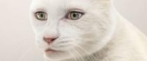 動物們換上人類眼睛的模樣