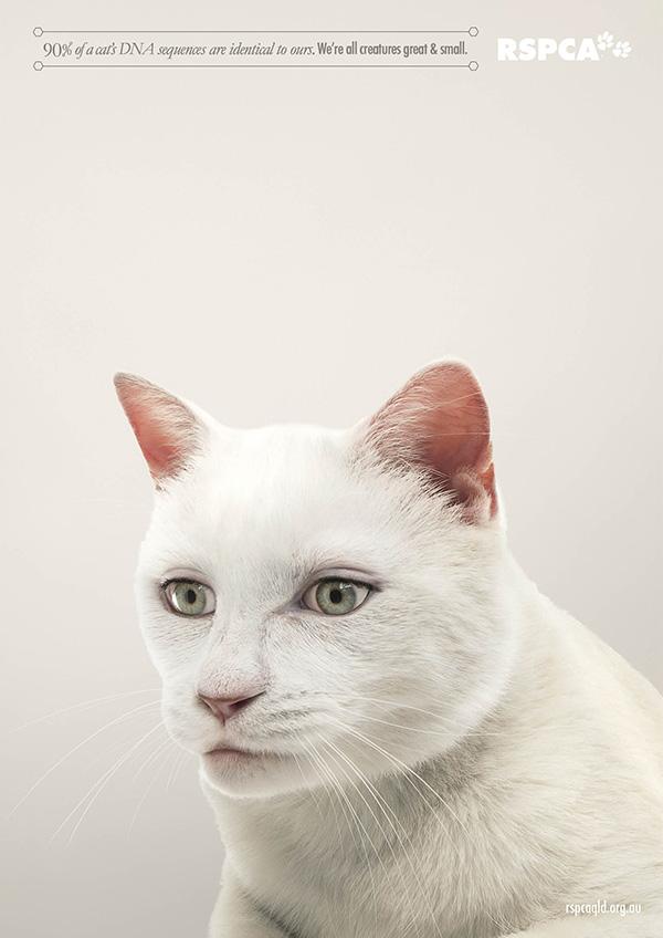 動物們換上人類眼睛的模樣1