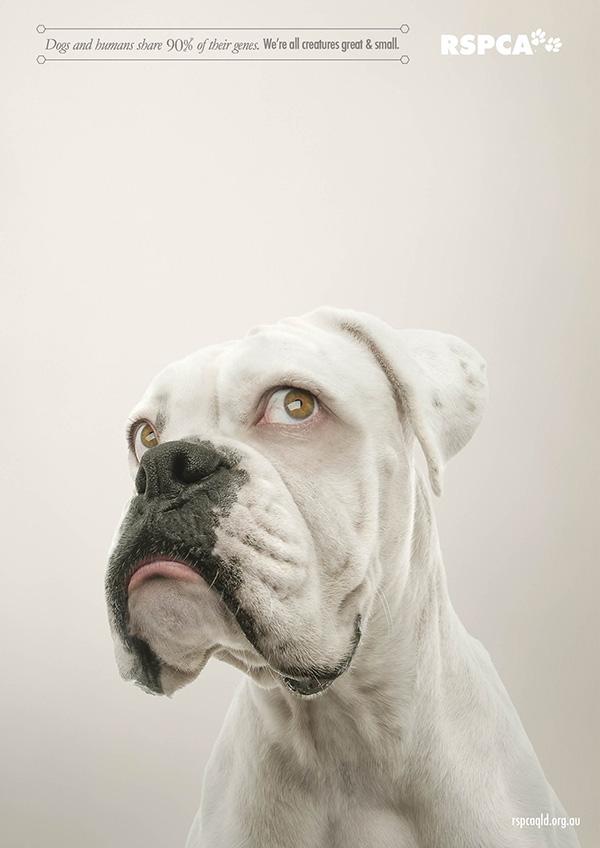 動物們換上人類眼睛的模樣2