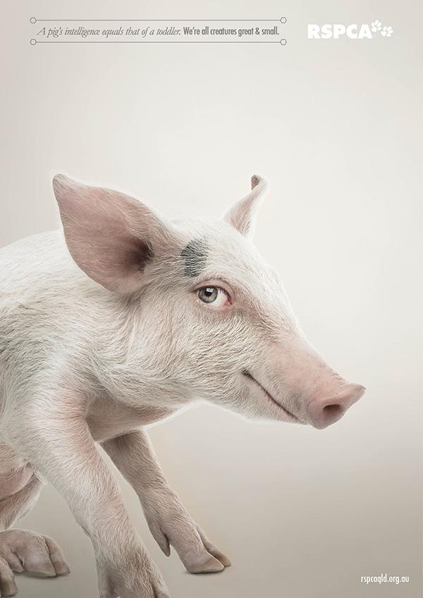 動物們換上人類眼睛的模樣3