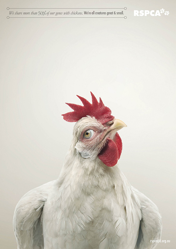 動物們換上人類眼睛的模樣4