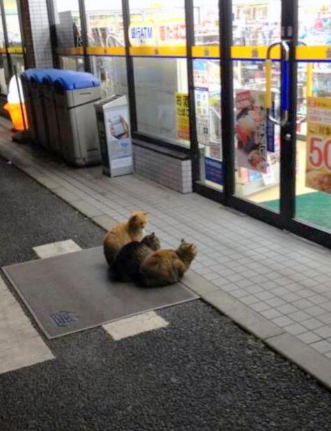 歡迎光臨貓貓便利商店10