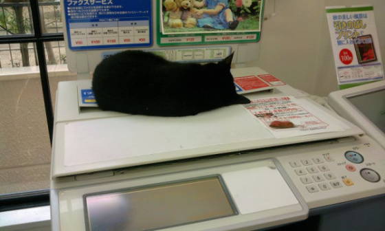歡迎光臨貓貓便利商店3
