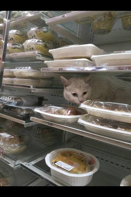 歡迎光臨貓貓便利商店4