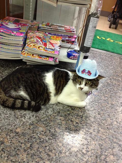 歡迎光臨貓貓便利商店5